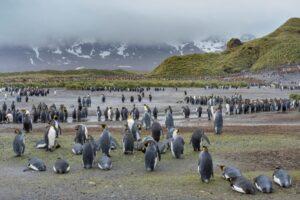 Гигантский айсберг А68 угрожает популяциям пингвинов и тюленей