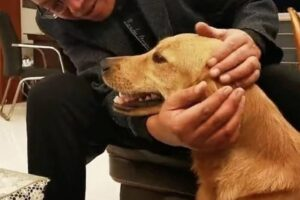 В Китае собака прошла 100 километров до дома