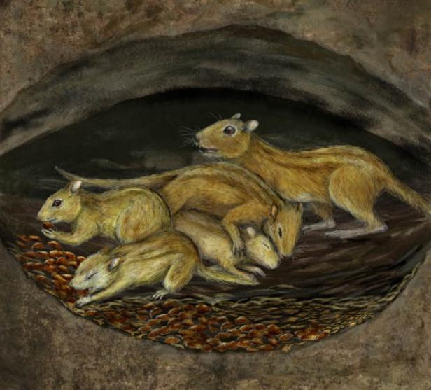 Обнаружены древнейшие дружелюбные мыши