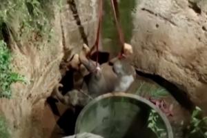 В Индии 12 часов спасали слона, застрявшего в колодце: видео