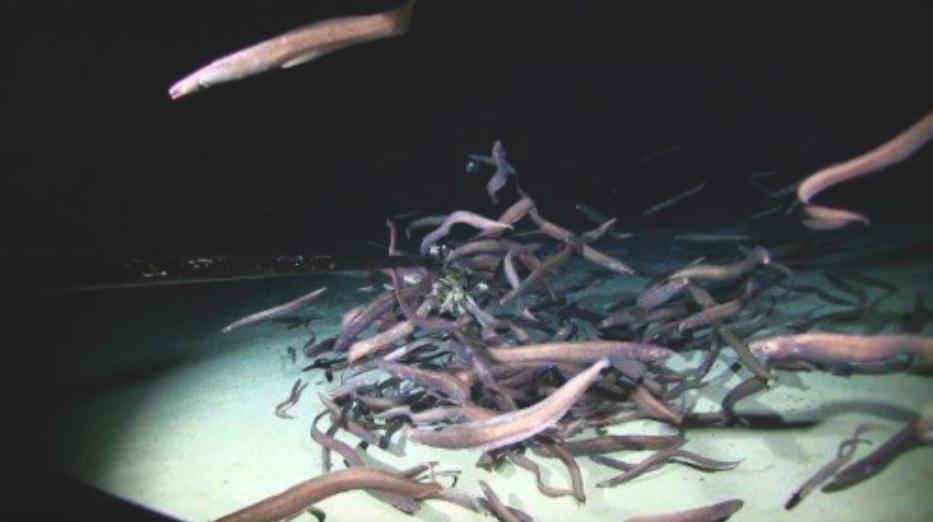 Биологи зафиксировали рекордное скопление рыб в глубинной морской зоне.Вокруг Света. Украина
