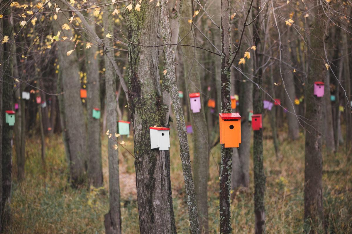 Необычный лес в Вермонте: как на болоте