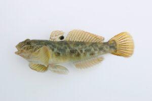 Рыбы используют плавники, как люди — пальцы