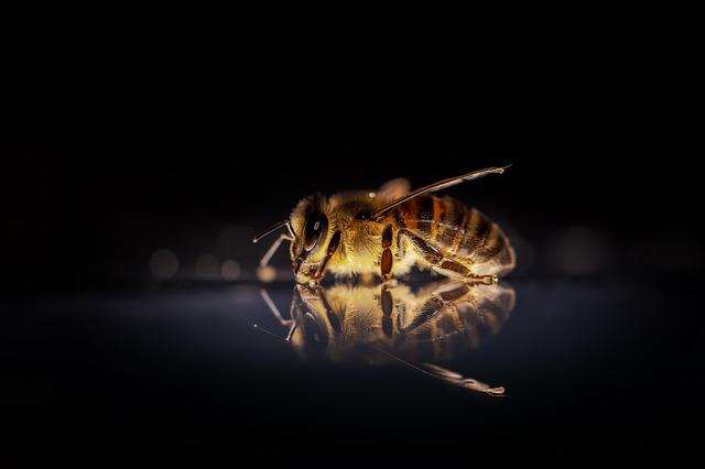 В Австралии нашли пчел, которые ночью работают, а днем спят.Вокруг Света. Украина