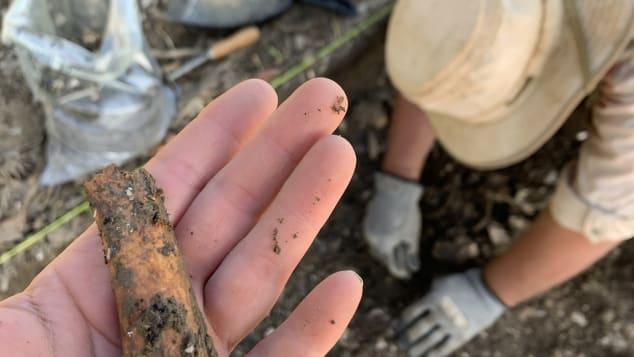В США археологи раскопают 300-летний квартал рабов.Вокруг Света. Украина