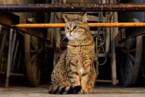 В Стамбуле умерла кошка-хранительница Айя-Софии