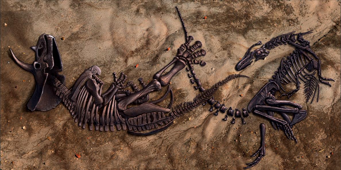 В США покажут полный скелет тираннозавра, погибшего на дуэли.Вокруг Света. Украина