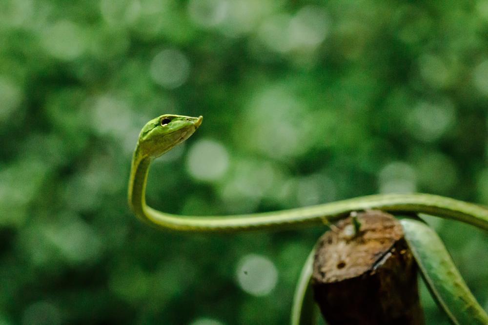 В Индии новый вид змей назвали в честь доктора-чудака.Вокруг Света. Украина