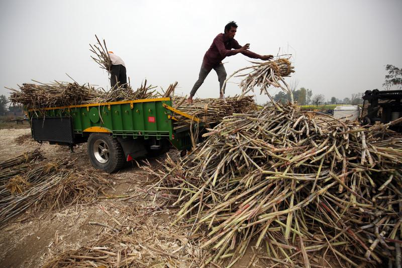 Граждан Индии попросили есть больше сахара.Вокруг Света. Украина