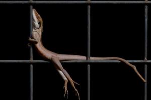 Кокосовый осьминог, спящая белка, артистичный дракон: фотоконкурс ищет народного победителя