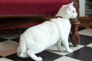 Богатый француз оставил наследство котам Эрмитажа
