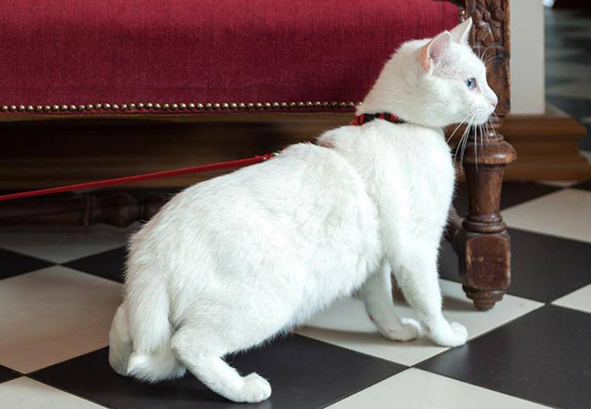 Богатый француз оставил наследство котам Эрмитажа.Вокруг Света. Украина
