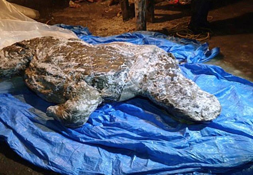 В Сибири найдены отлично сохранившиеся останки шерстистого носорога