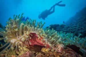У берегов Африки найдены рифы, защищенные от глобального потепления