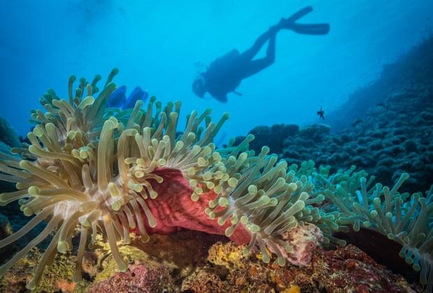 У берегов Африки найдены рифы, защищенные от глобального потепления.Вокруг Света. Украина