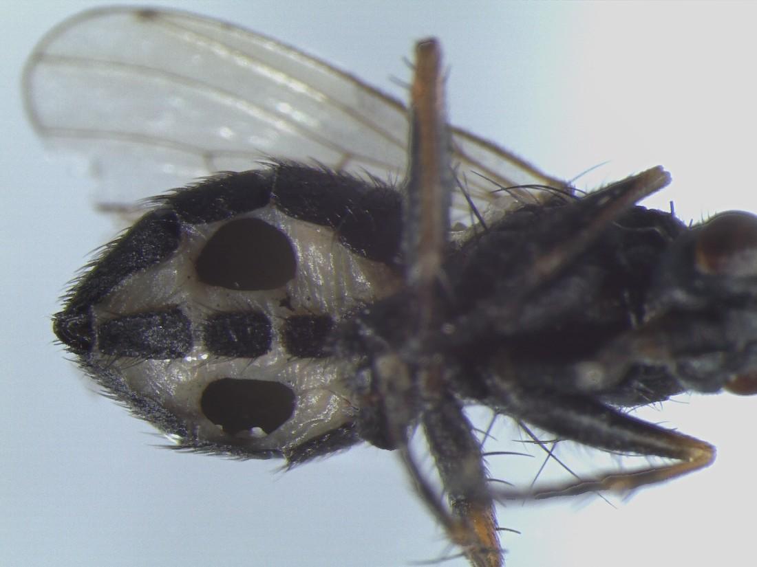мухи исследования