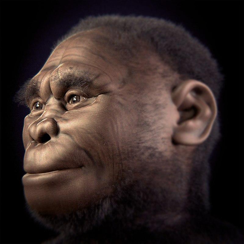 Лисица из Индонезии помогла понять эволюцию «хоббитов»