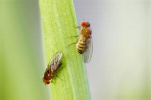 Убаюкивание действует на мух, как на людей