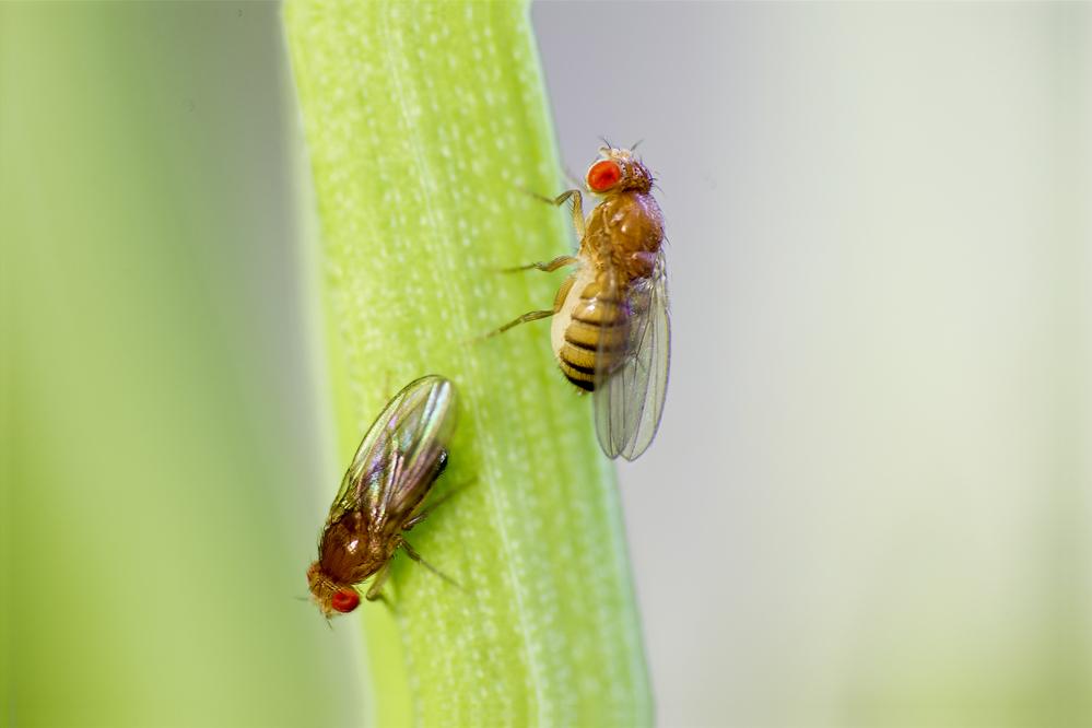 Убаюкивание действует на мух, как на людей.Вокруг Света. Украина