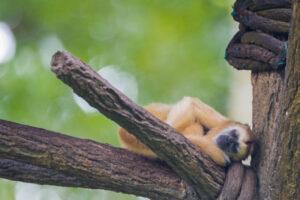 Какие животные — настоящие сони?