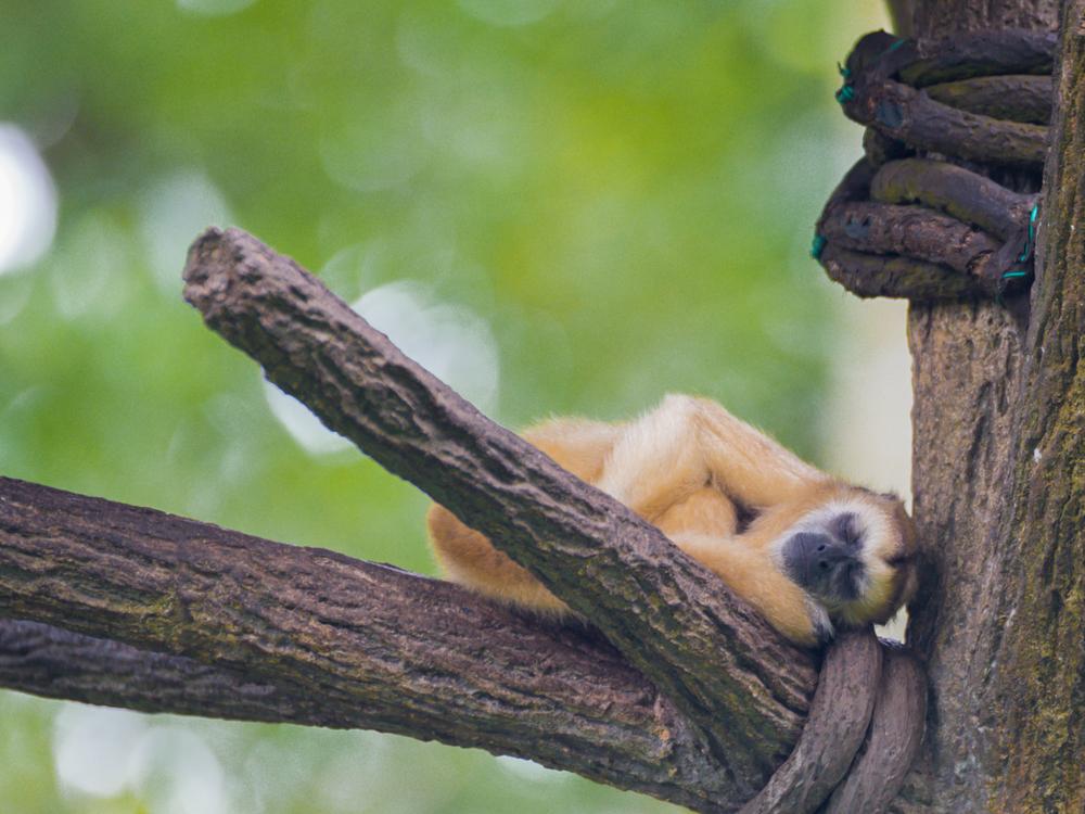 Какие животные — настоящие сони?.Вокруг Света. Украина