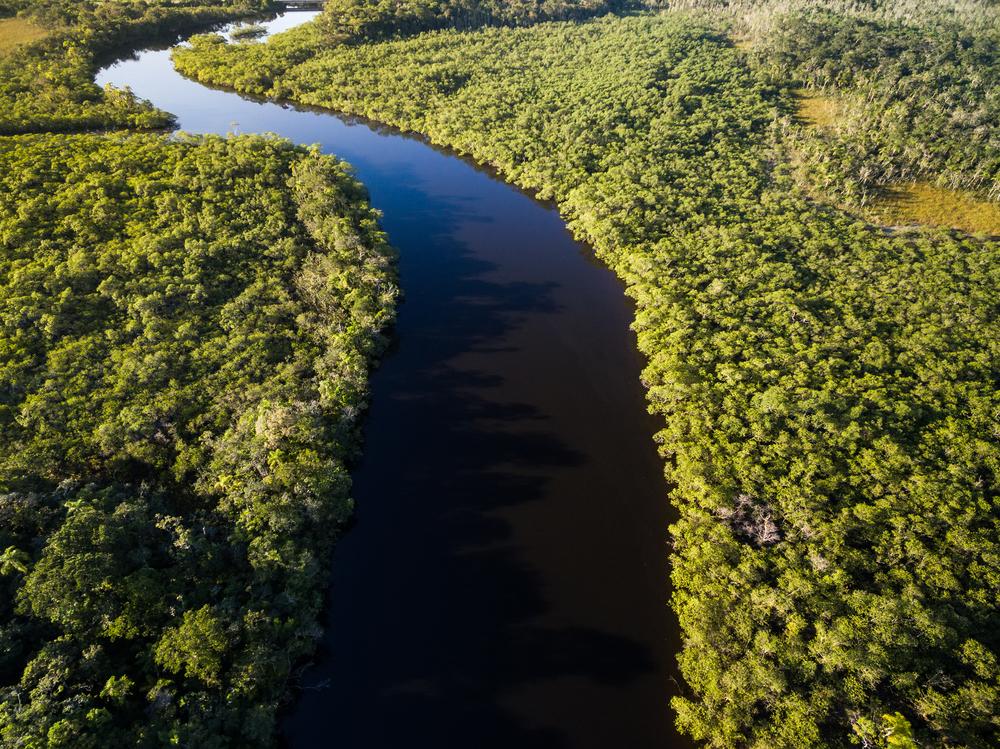 Вырубка лесов Амазонии достигла максимума.Вокруг Света. Украина