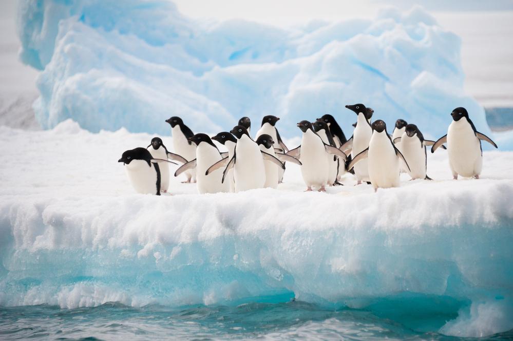 За три месяца в Антарктиде зафиксировали 30 000 подземных толчков