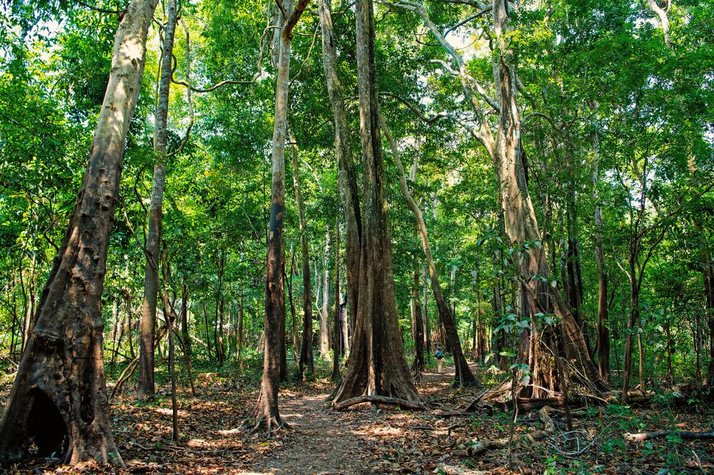 Часть тропических лесов в Бразилии стали выделять больше CO2, чем поглощают