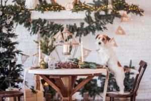 Почему собакам нельзя давать шоколад и виноград