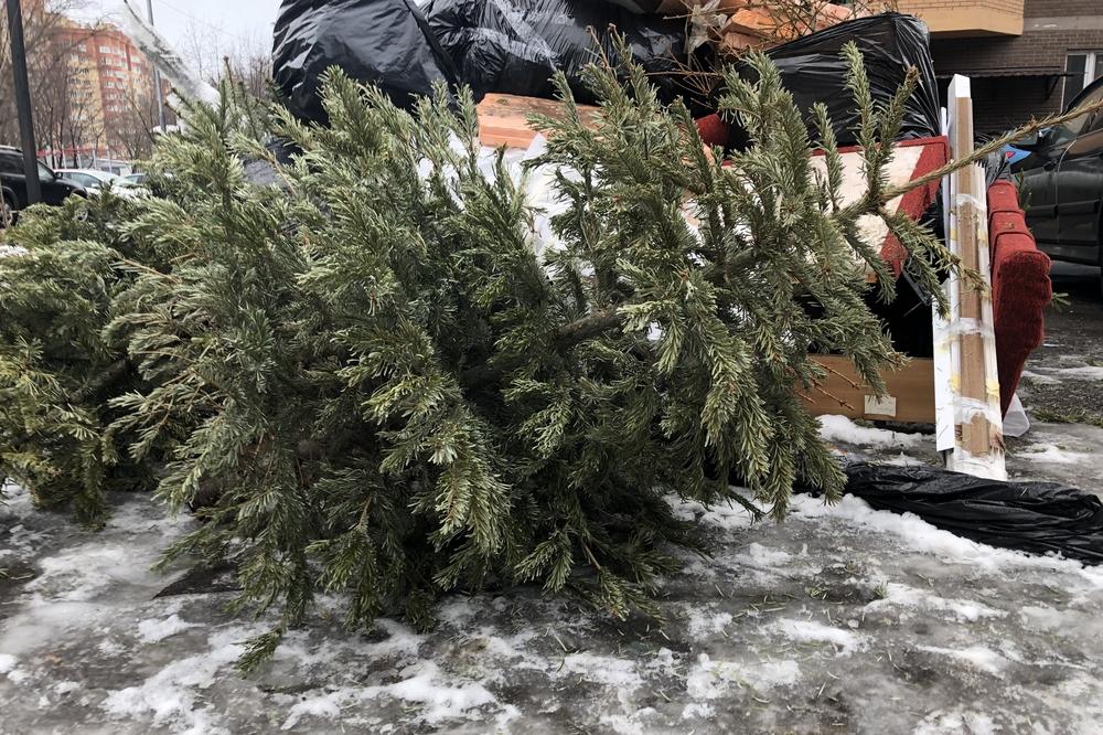 Где в Киеве будут принимать елки на утилизацию