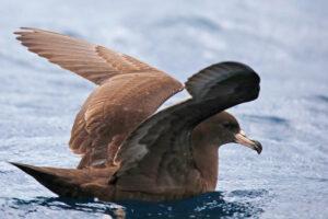Поселок в Новой Зеландии гасит фонари, чтобы спасти птиц