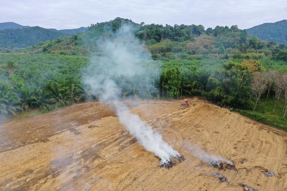 Синтетическое пальмовое масло: путь к спасению тропических лесов.Вокруг Света. Украина
