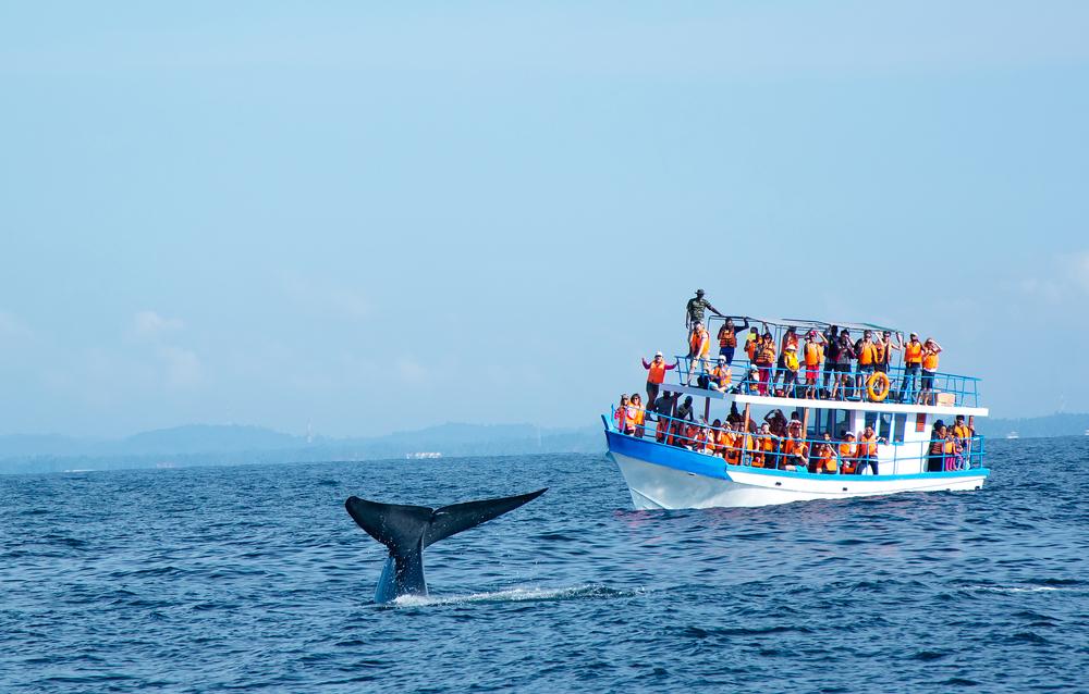 Тихоходные суда почти так же смертоносны для китов, как и скоростные