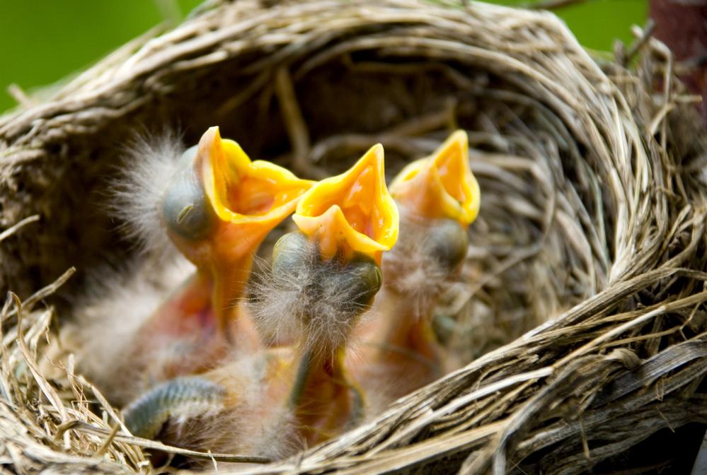 Из-за изменения климата птицы Европы сменили ареалы обитания.Вокруг Света. Украина