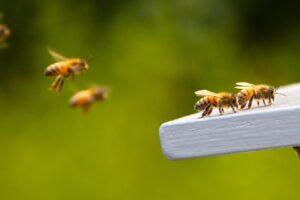 Люди и пчелы ведут похожую общественную жизнь