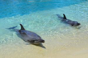 Тяжелая кожная болезнь дельфинов вызвана изменением климата: исследование
