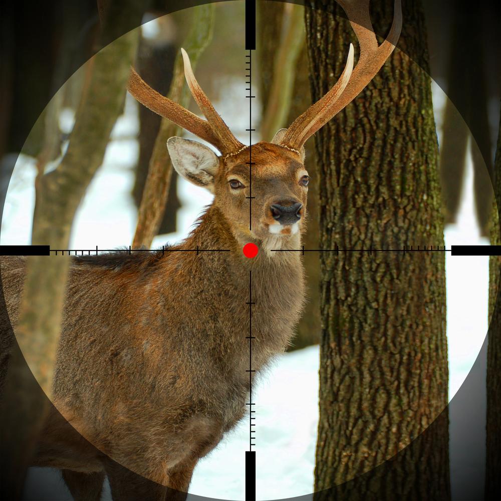 Охотники убивают каждые три минуты