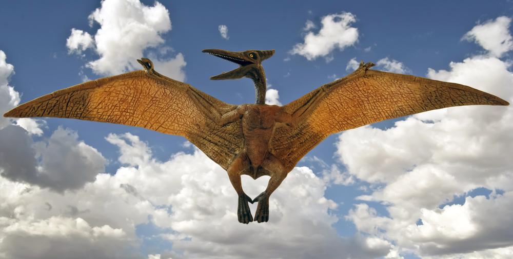 Палеонтологи раскрыли тайну происхождения птерозавров