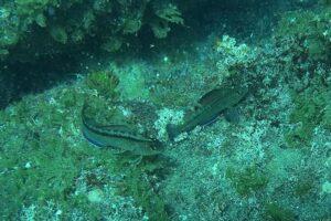 Некоторым видам рыб глобальное потепление идет только на пользу