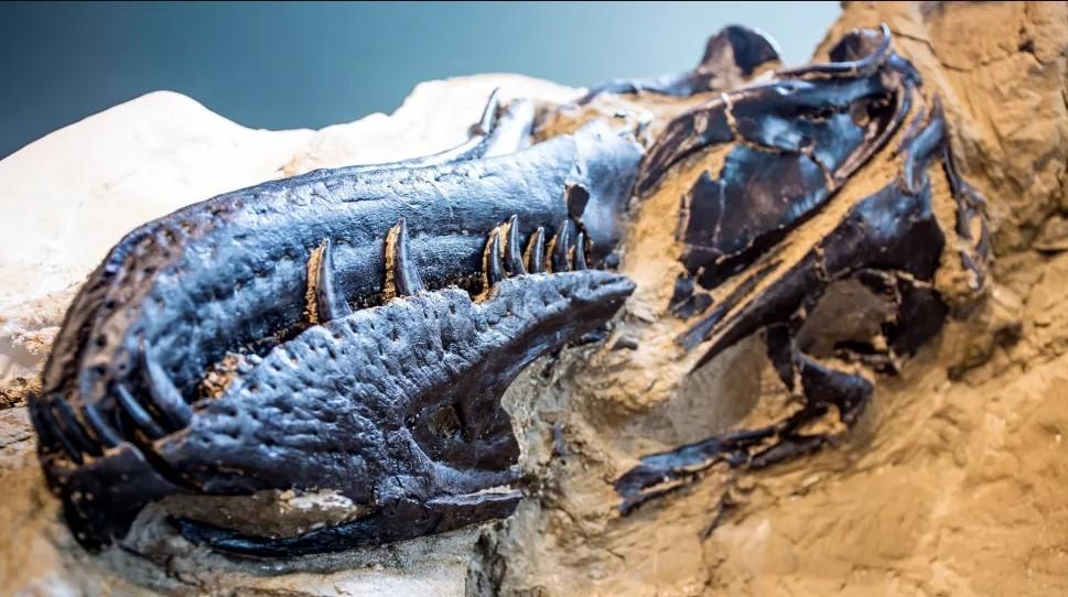 10 самых крутых открытий 2020 года, связанных с динозаврами.Вокруг Света. Украина