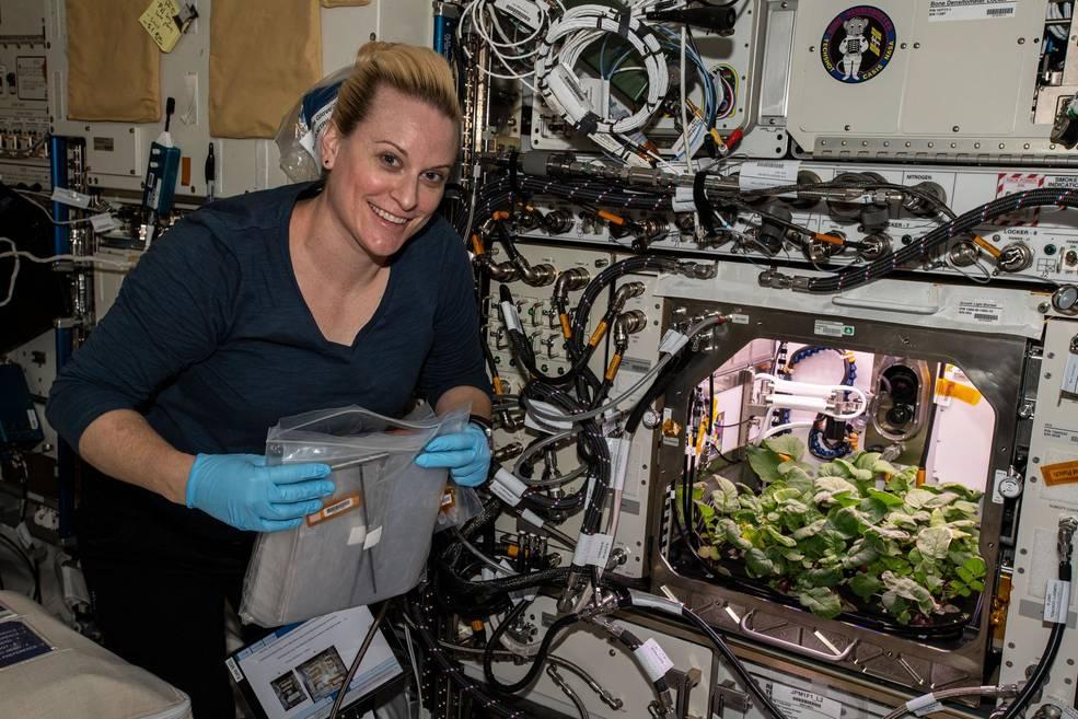 На МКС собрали первый урожай редиса.Вокруг Света. Украина