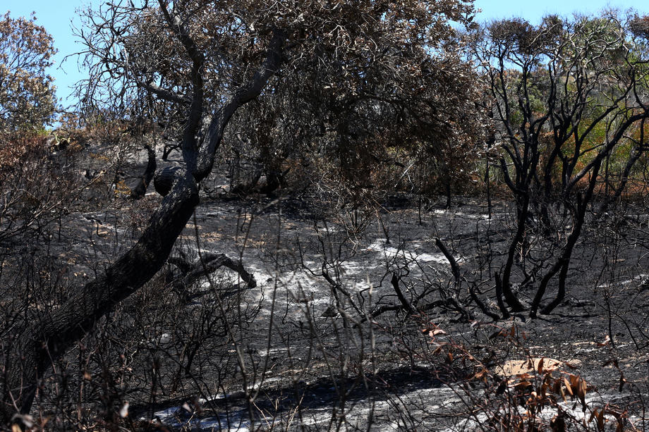 На австралийском острове сгорела половина уникального
