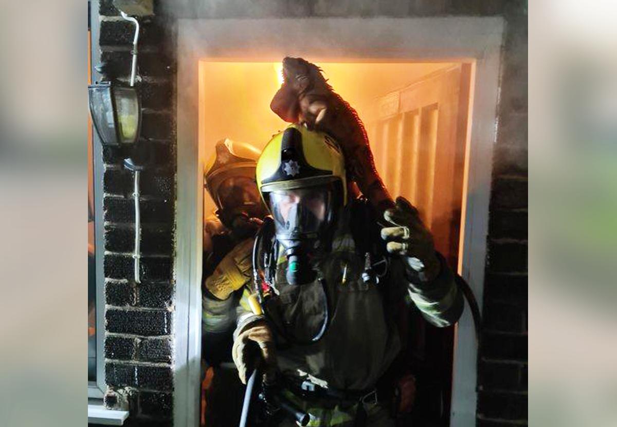 Игуана спаслась от огня, взгромоздившись на шлем пожарного