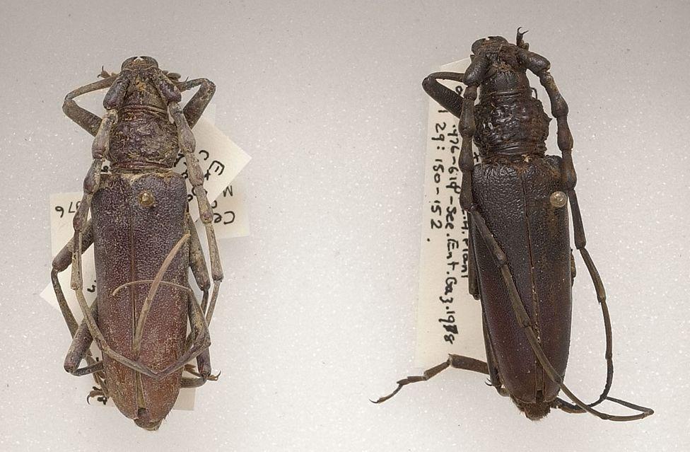 Дубовые усачи бронзового века жили в сухой и теплой Англии