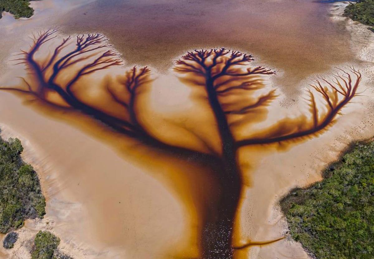 Фотограф обнаружил в австралийском озере великолепное «древо жизни»