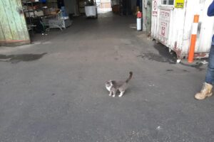 Кошка три недели добиралась из Украины в Израиль, питаясь конфетами