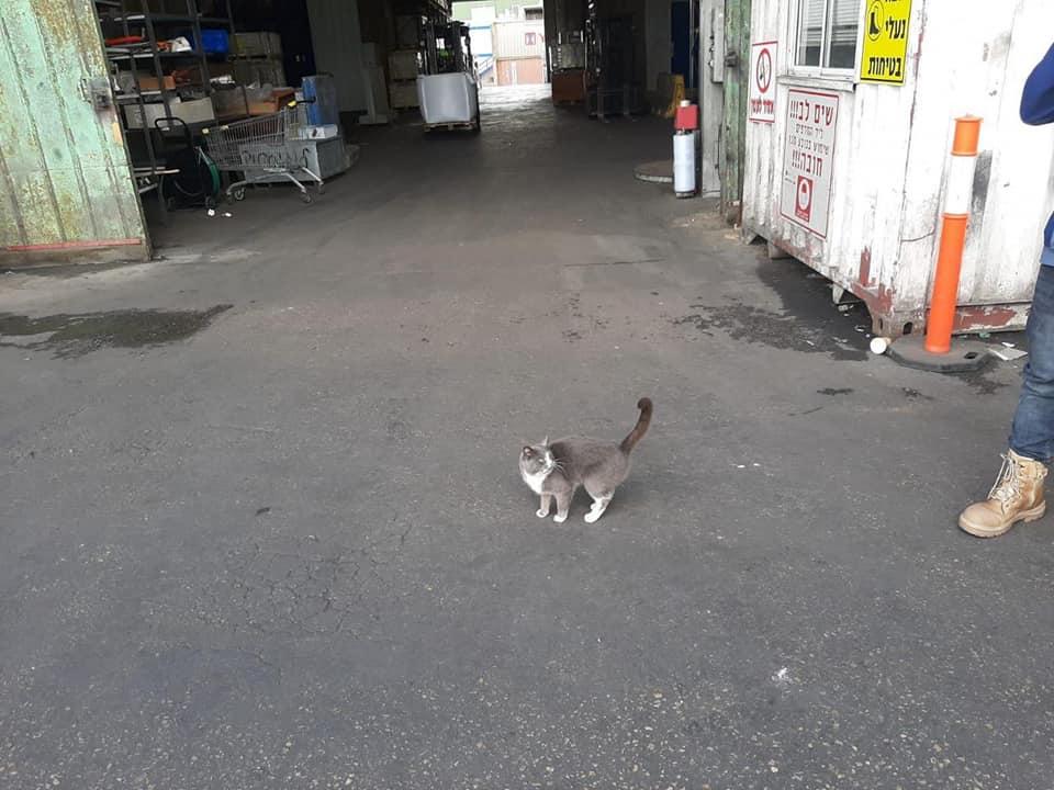 Кошка три недели добиралась из Украины в Израиль, питаясь конфетами.Вокруг Света. Украина