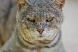 Одичавшие кошки в Австралии убивают намного больше животных, чем хищные куницы