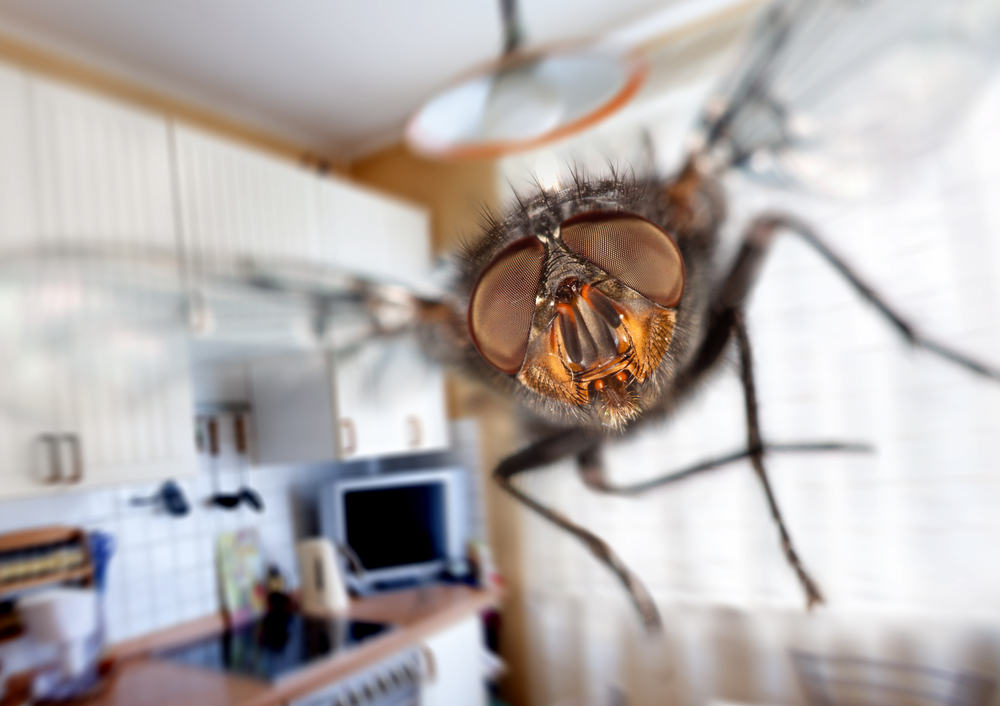 Почему комнатных мух так сложно поймать