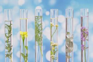 Биологи разгадали тайну происхождения цветов